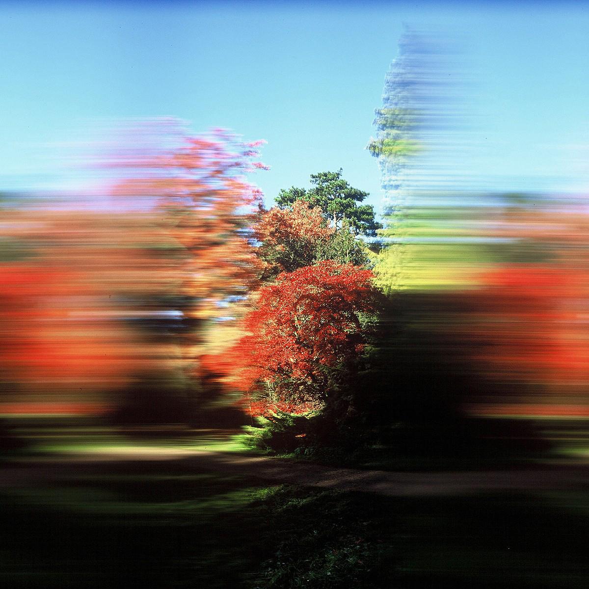 Rob Carter - Travelling Still, Westonbirt Arboretum I, England