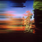 Rob Carter - Travelling Still, Westonbirt Arboretum II, England