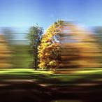 Rob Carter - Travelling Still, Westonbirt Arboretum III, England