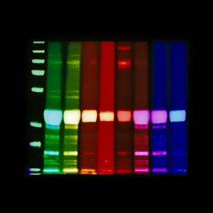 Jo Bradford - Lensless Molecular 5