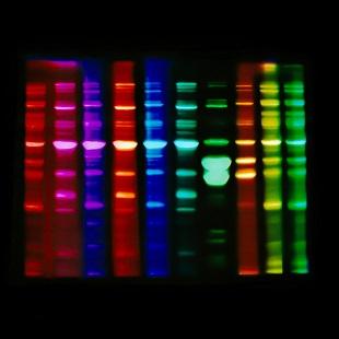 Jo Bradford - Lensless Molecular 2