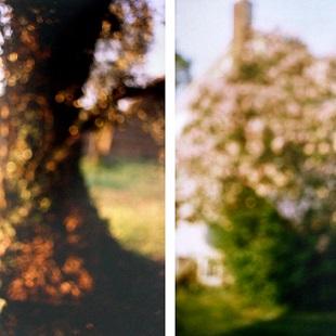 David Armstrong - Tree Trunk, Tivoli, Lilacs, Bovina (diptych)